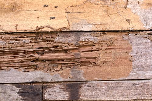 Protégez-vous des mauvaises surprises : les termites - La garantie des vices cachés dans l'immobilier